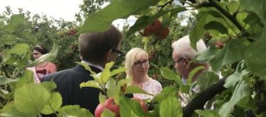 Apfelplantage 2018