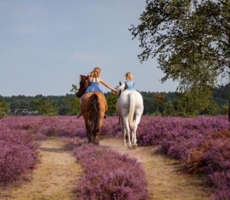 Pferde Kinder Viezer Heide