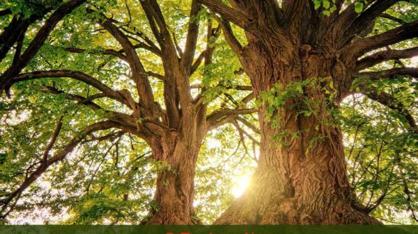 Internationaler Tag des Baumes